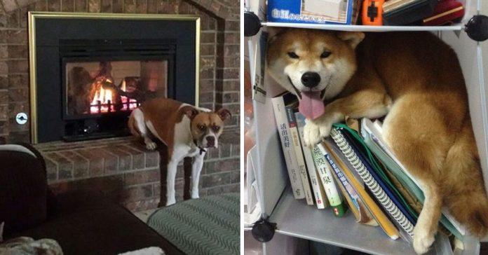 15 mascotas que se toman muy en serio lo de relajarse banner