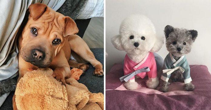 15 razas de perros que son tan bonitas que te haran quererlos todos banner