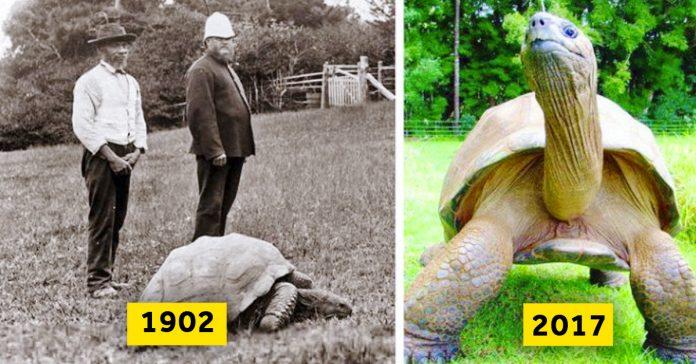 20 fotos del antes y el despues que te mostraran el poder del paso del tiempo banner