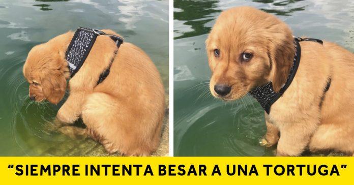 20 imagenes de perros que compartieron para mostrar tiernas historias banner