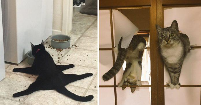 gatos se vuelven locos cuando estan aburridos