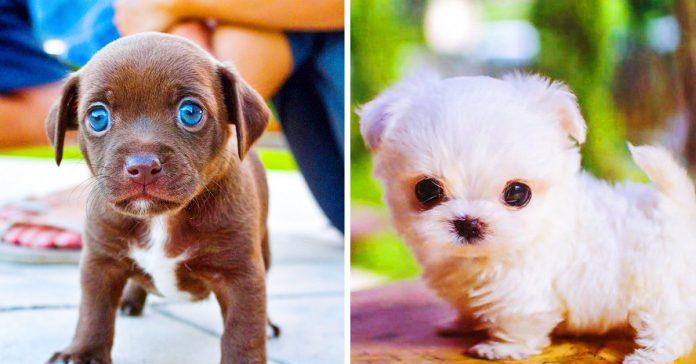 los 20 perros mas adorables que conseguiran derretir tu corazon banner