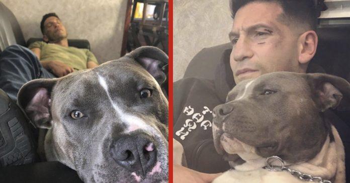 20 imagenes estrella walking dead muestra por que jamas rescatar pitbull banner