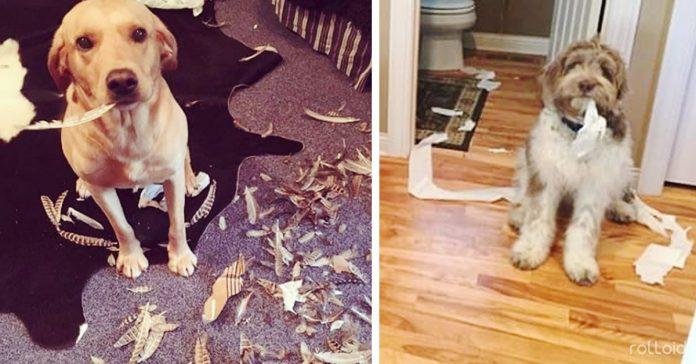 perros malos casa