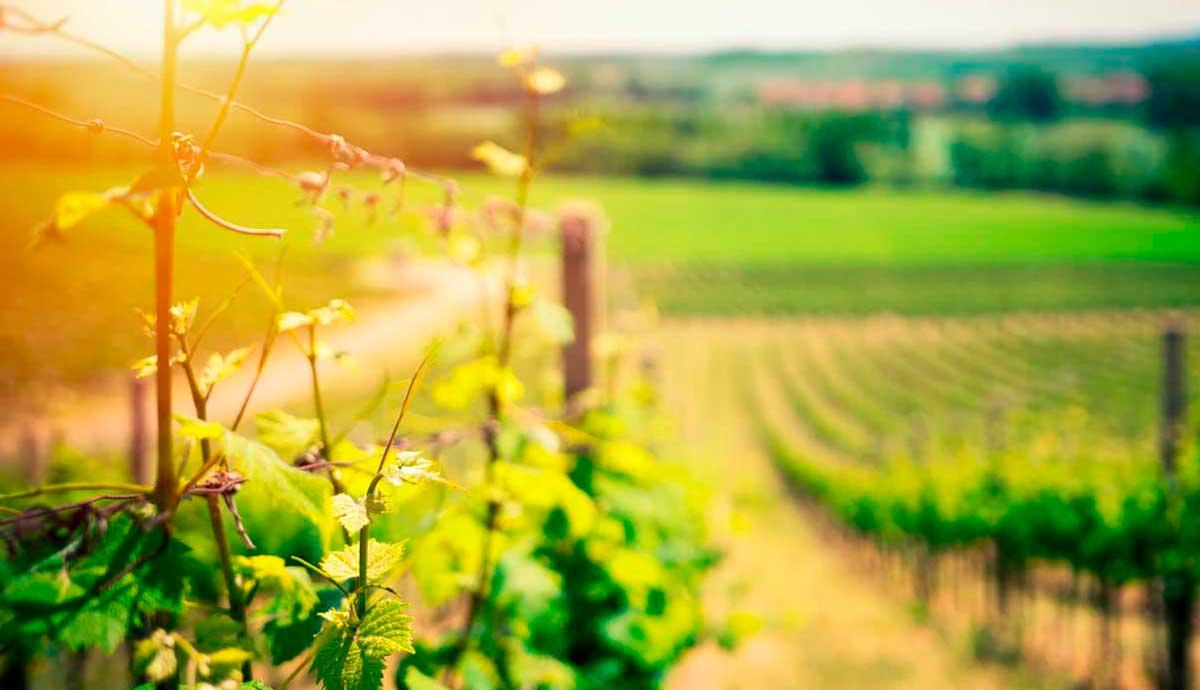 ruta-vino-alsacia