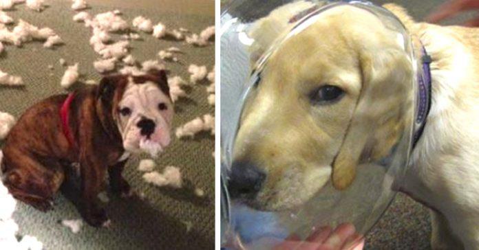 imagenes replantearte tener perro